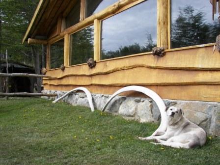 Huskies Ushuaia