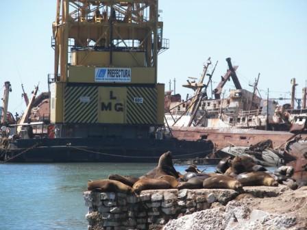 Lobos marinos Mar del Plata