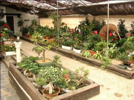 Fundación Sales bonsais