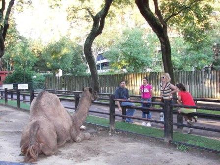 Dromedario Zoo