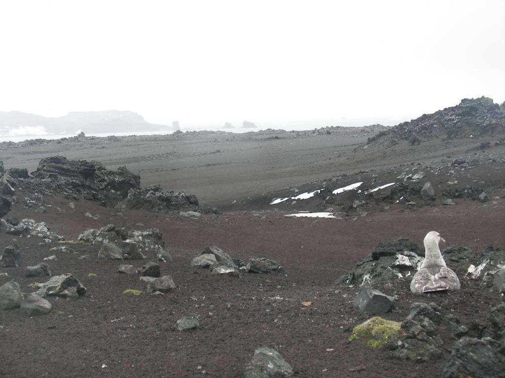 Isla Pingüino