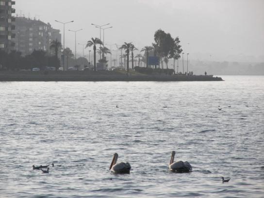 Pelicanos Izmir