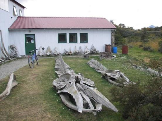 Huesos de cetáceos