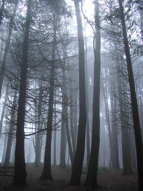 Bosque espeso