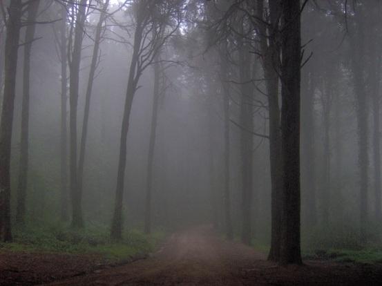 sonido de los bosques