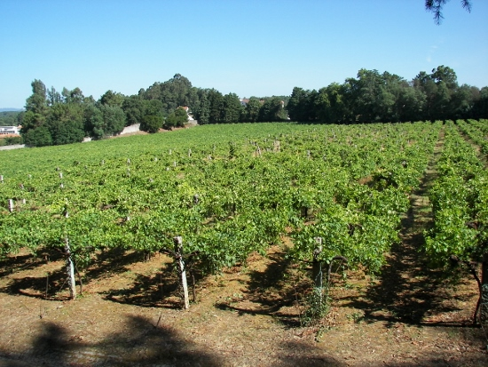 Portugal vinos