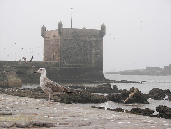Skala du Port Essaouira