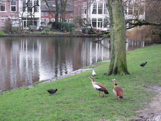 Vondelpark aves